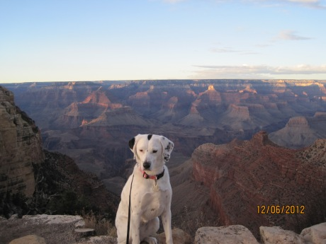 Where's Montana? At the Grand Canyon! She was a hit again! People coming up wanting their pictures taken with her!