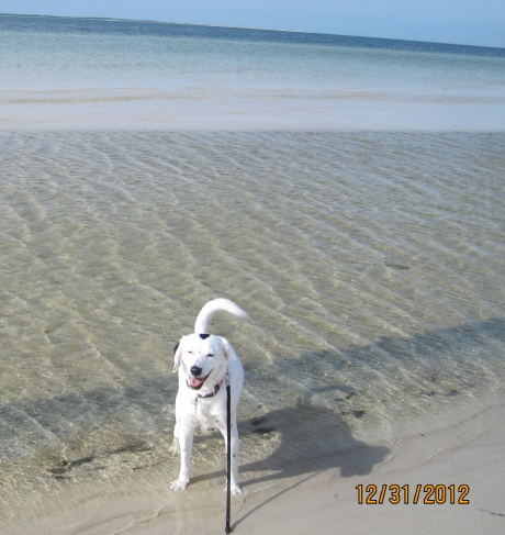 Montana running in the Gulf to chase down some birds!