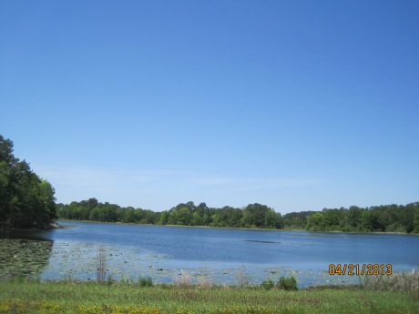 Florida back road through Three Rivers State Park. Ponds loaded with wildlife and  fishing lakes.