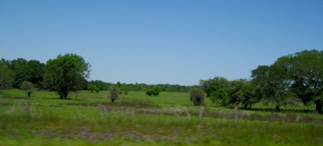 Then you cross the Georgia State line and the terrain switches to commercial pine thickets and agricultural fields.