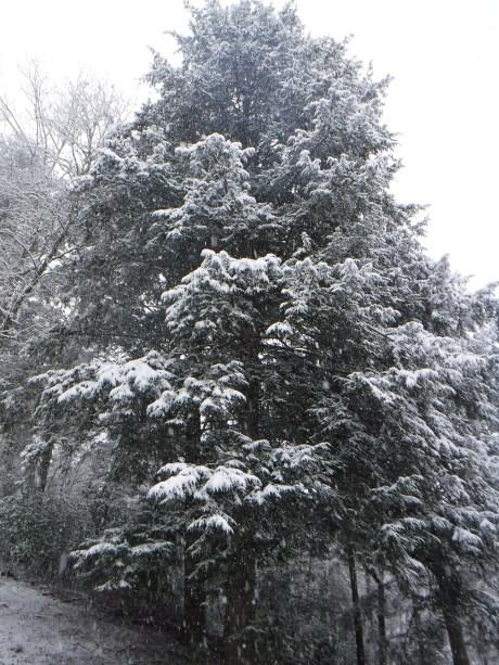 2020-02-08 Snow-1 Tree