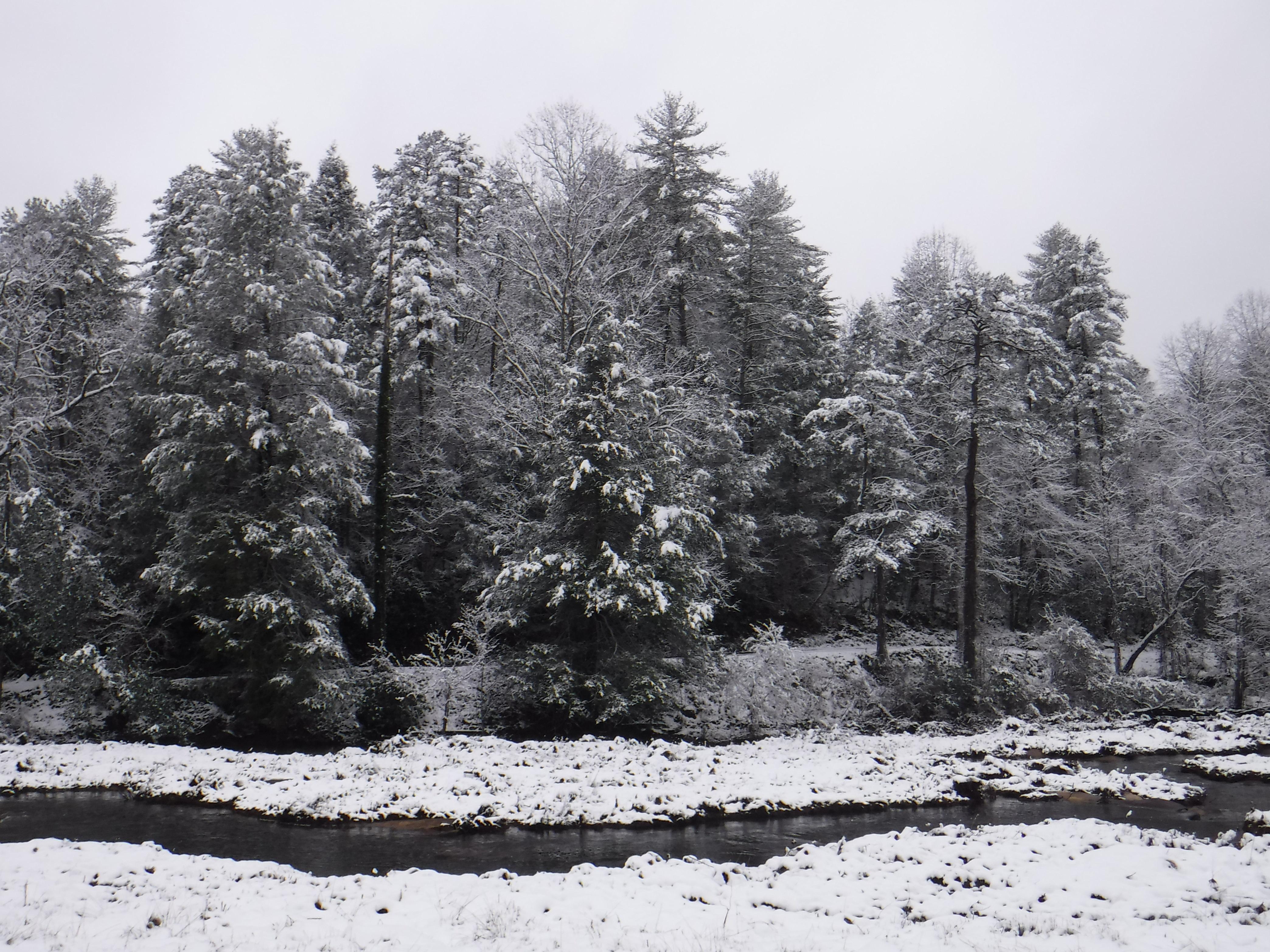 2020-02-08 Snow-10 TreeRv