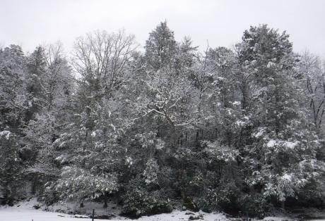 2020-02-08 Snow-11 Tree
