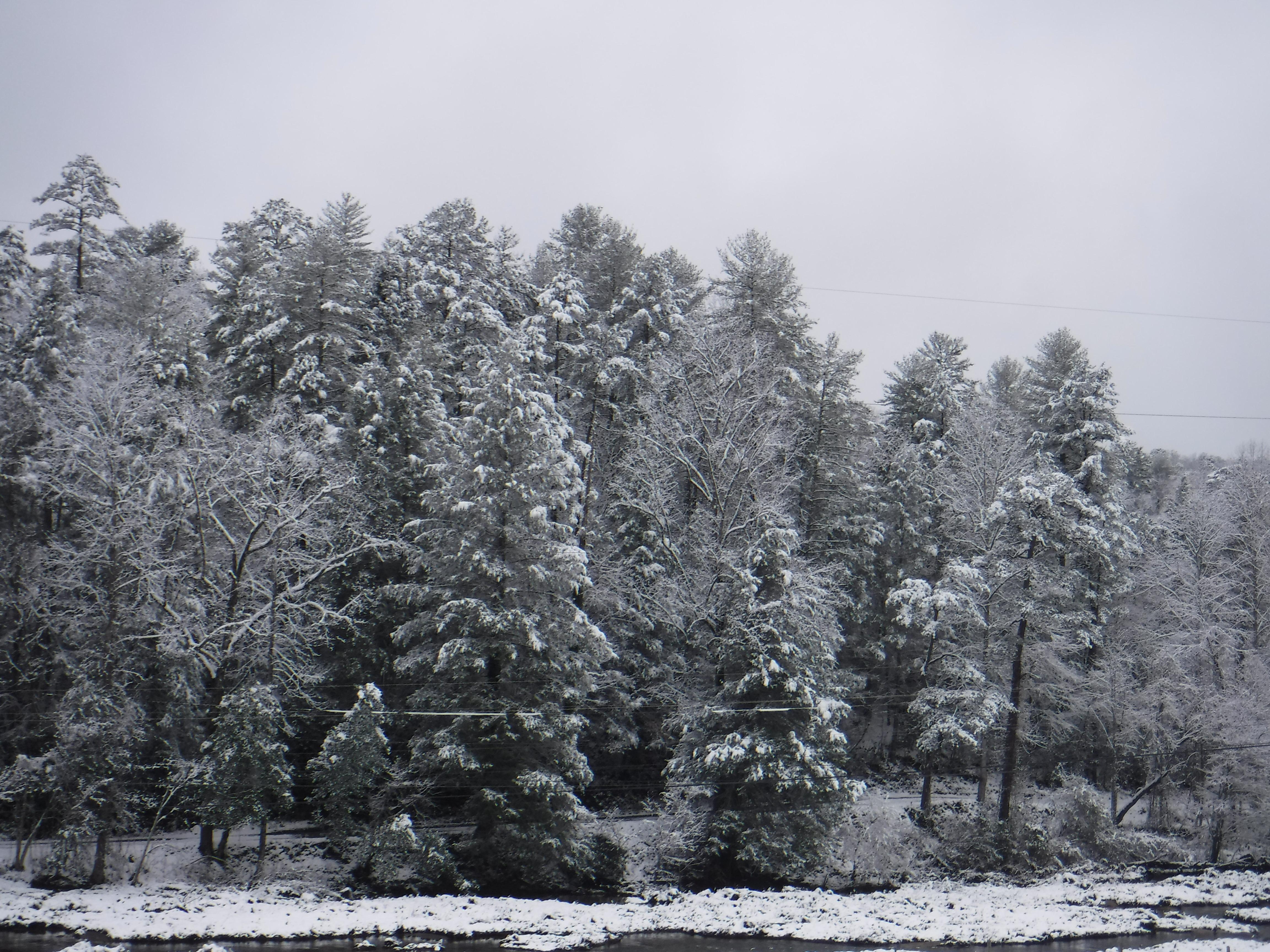 2020-02-08 Snow-4 Tree