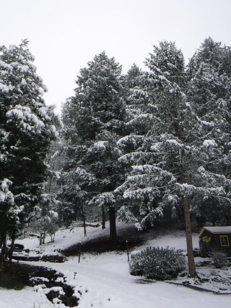 2020-02-08 Snow-6 Tree