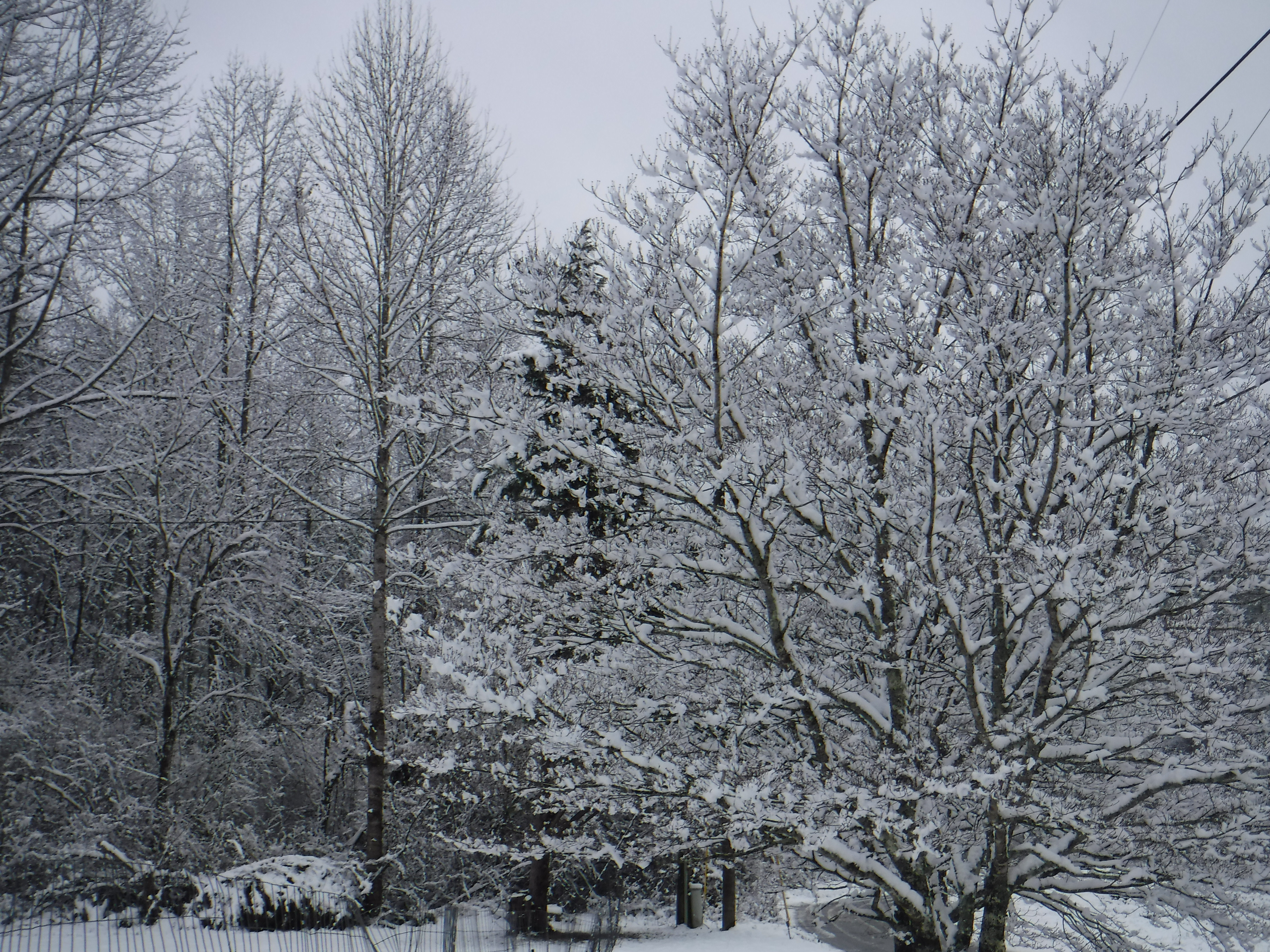 2020-02-08 Snow-7 Tree